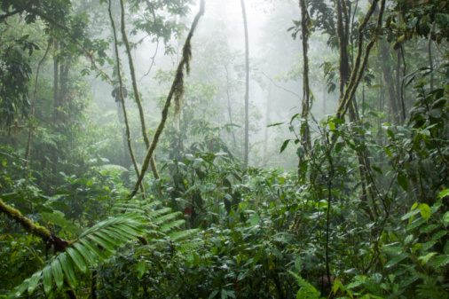 Central America「Rainforest, Costa Rica」:スマホ壁紙(3)