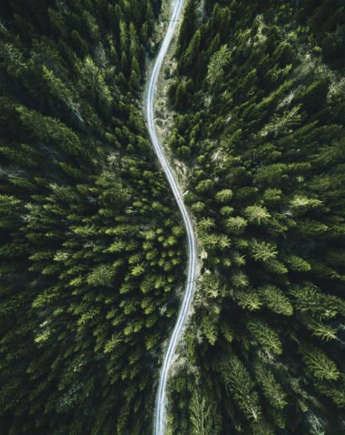 スイスの夏森林空中写真:スマホ壁紙(壁紙.com)
