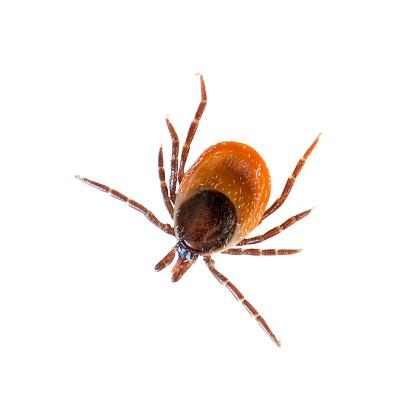 Parasitic「Tick」:スマホ壁紙(14)