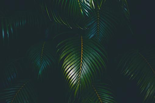 Branch - Plant Part「Palm leaves background」:スマホ壁紙(14)