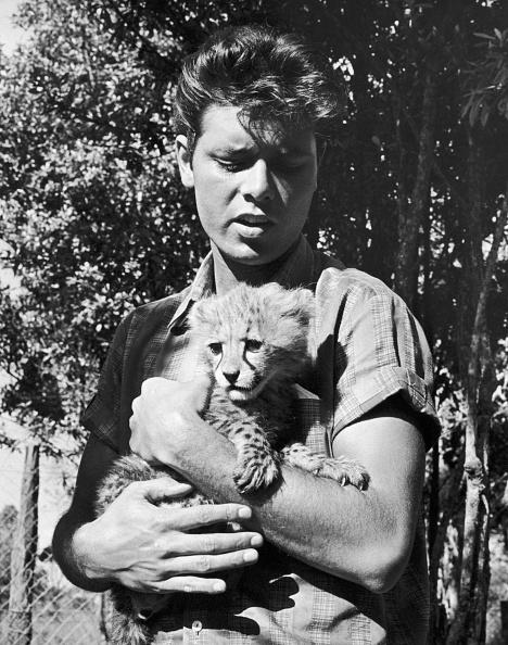 Big Cat「Cliff And Cheetah」:写真・画像(17)[壁紙.com]