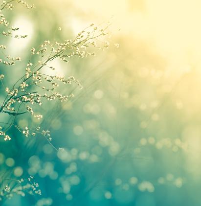Wildflower「Meadow during sunset」:スマホ壁紙(15)
