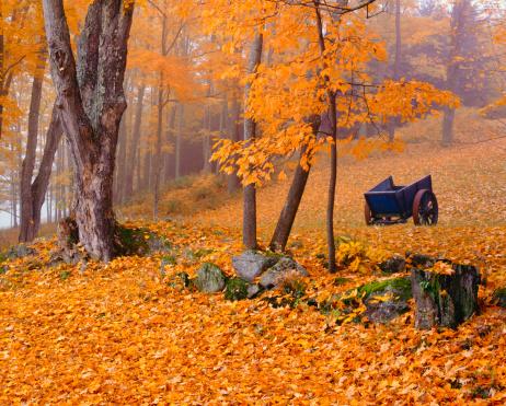 グリーン山脈「秋のカントリーサイドでバーモント(P」:スマホ壁紙(15)