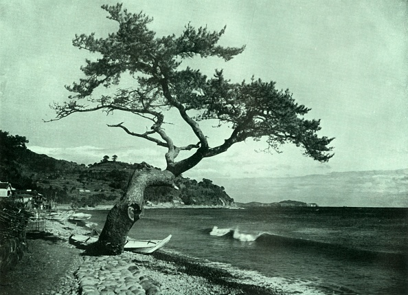 Botany「The Tree And The Wave」:写真・画像(17)[壁紙.com]