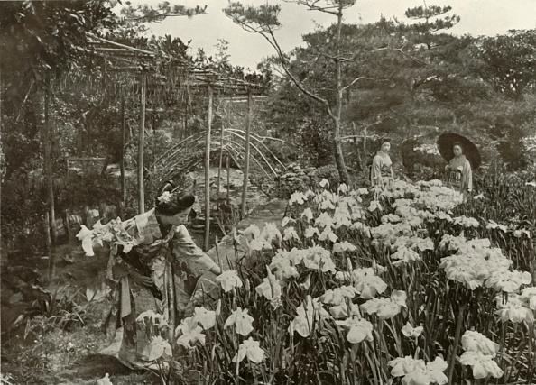 Flowerbed「In An Iris Garden」:写真・画像(6)[壁紙.com]