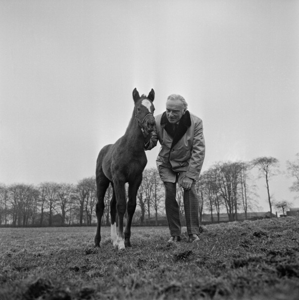 Racehorse「O'Sullevan And Foal」:写真・画像(4)[壁紙.com]
