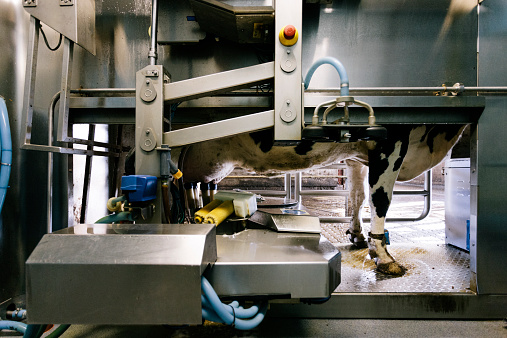 Cow「Automated milking system」:スマホ壁紙(11)