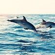 Dolphin壁紙の画像(壁紙.com)