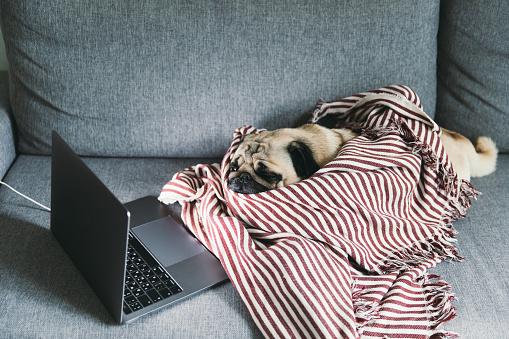 Christmas「Tired dog watching movies at home」:スマホ壁紙(0)