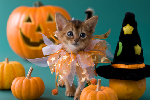 Halloween costume「Abyssinian Kitten and Halloween」:スマホ壁紙(19)