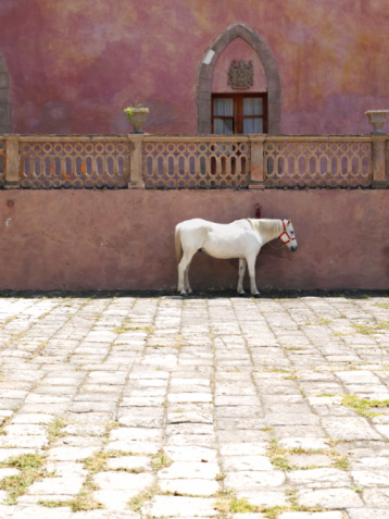 Paving Stone「Horse tied in front of hacienda」:スマホ壁紙(2)