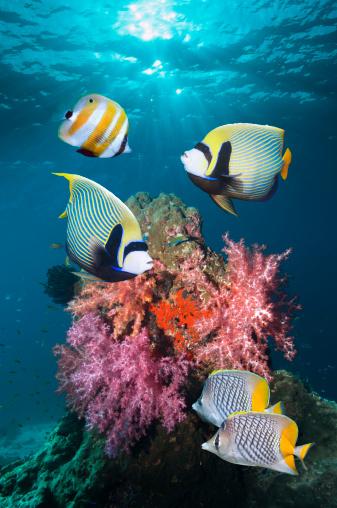 Soft Coral「Tropical coral reef fish」:スマホ壁紙(7)