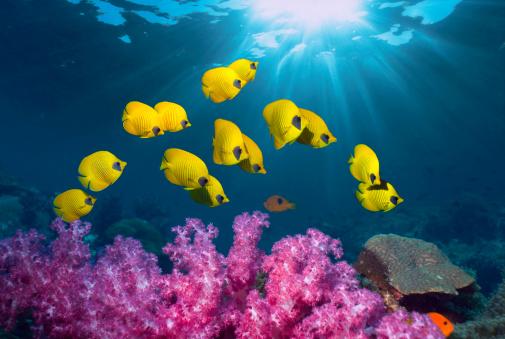 Coral - Cnidarian「Tropical coral reef scenery」:スマホ壁紙(1)