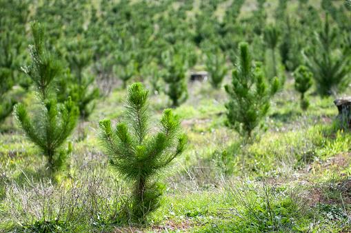 Reforestation「Plant a Tree」:スマホ壁紙(4)