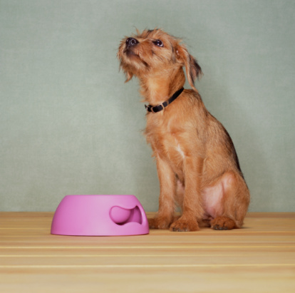 Patience「Dog sitting by bowl, looking up」:スマホ壁紙(10)