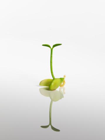Seed「Form」:スマホ壁紙(14)