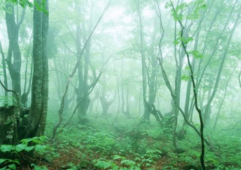 Satoyama - Scenery「Forest」:スマホ壁紙(4)