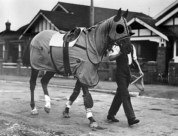 Horse「Phar Lap」:写真・画像(19)[壁紙.com]