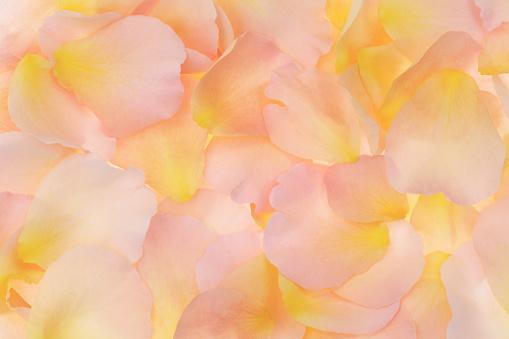 パステルカラー「Soft, peachy, fragrant rose petals filling frame.」:スマホ壁紙(19)
