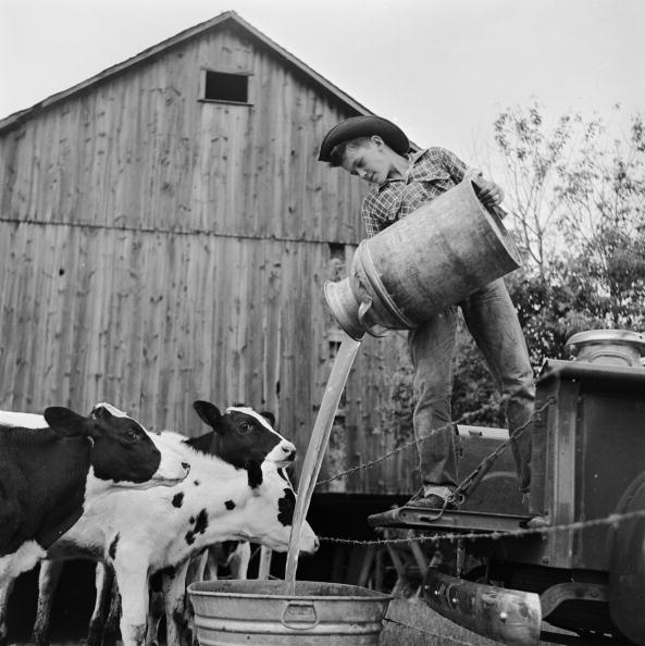 Pouring「Tending To Calves」:写真・画像(10)[壁紙.com]