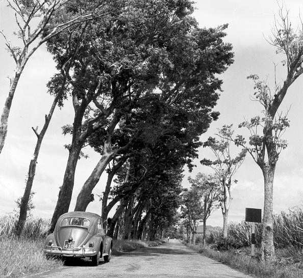 Volkswagen「Tree Road」:写真・画像(15)[壁紙.com]