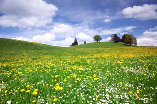 Agricultural Field「bavarian spring meadow」:スマホ壁紙(9)