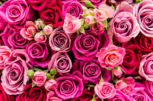 Flower「DON'T BE DAVE: A New Survey By Asda」:写真・画像(1)[壁紙.com]