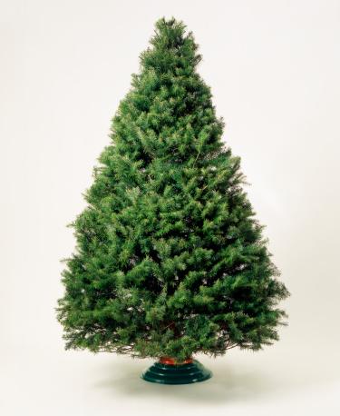 Christmas Tree「Undecorated Christmas tree」:スマホ壁紙(13)