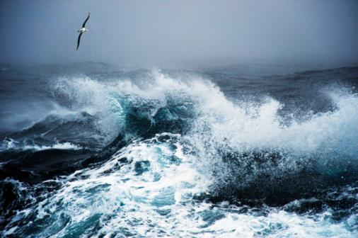 Antarctic Ocean「Wandering Albatross in flight over rough sea」:スマホ壁紙(12)