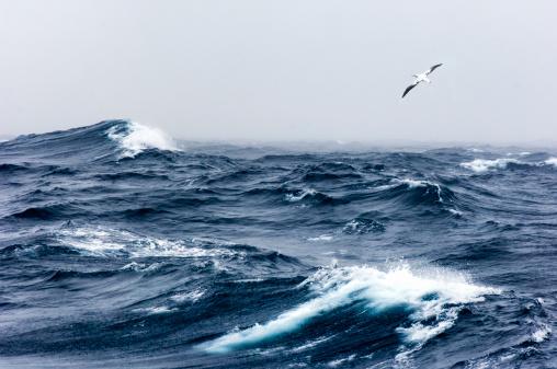 Extreme Weather「Wandering Albatross in flight over a rough sea」:スマホ壁紙(13)