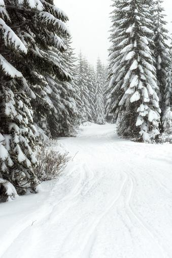 クリスタル山「Scenic winter landscape, Crystal Mountain area, Washington State, USA」:スマホ壁紙(4)
