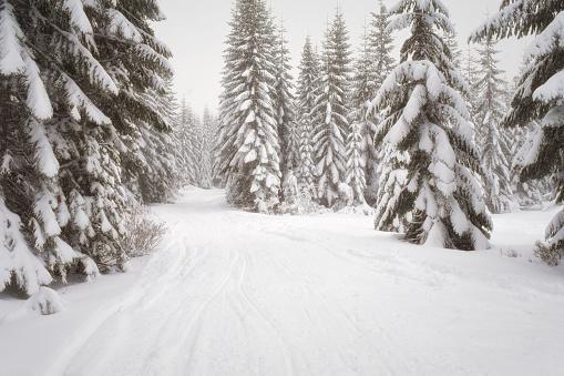 クリスタル山「Scenic winter landscape, Crystal Mountain area, Washington State, USA」:スマホ壁紙(3)