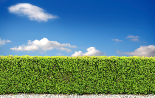 Hedge「backyard bush fence」:スマホ壁紙(14)