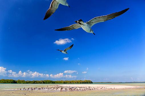Flock Of Birds「Low angle view of seagulls flying in Holbox Island, Quintana Roo, Yucatan Peninsula, Mexico」:スマホ壁紙(6)