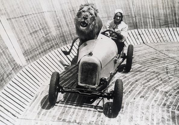Big Cat「Animal tamer Marjorie Kemp with favourite lion」:写真・画像(14)[壁紙.com]