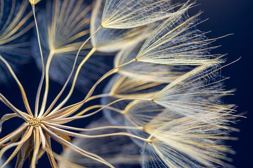 Ecosystem「Dandelion」:スマホ壁紙(14)