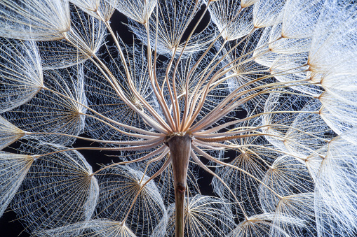 Ecosystem「Dandelion」:スマホ壁紙(0)