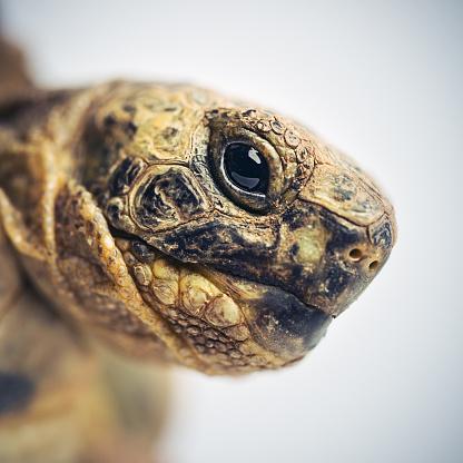 Animal Eye「Tortoise head macro portrait」:スマホ壁紙(17)