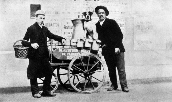 Domestic Animals「Milkman」:写真・画像(10)[壁紙.com]