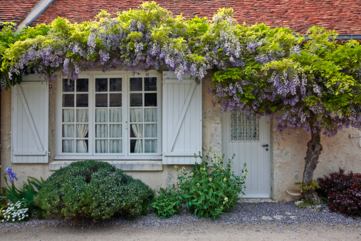 Front Door「Wisteria in full bloom surrounds the front of a house in Saint-Dye-Sur-Loire, France. This small village is found on the edge of the Loire river.」:スマホ壁紙(1)
