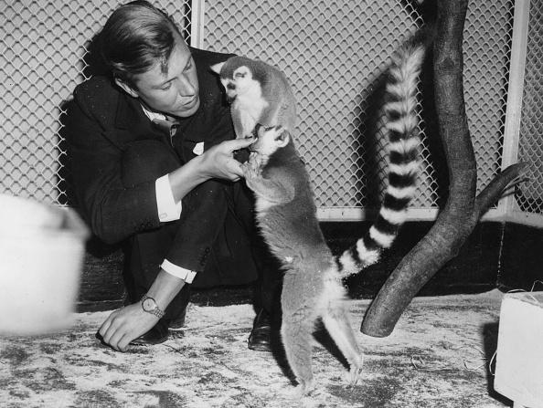 Animal「David Attenborough」:写真・画像(9)[壁紙.com]