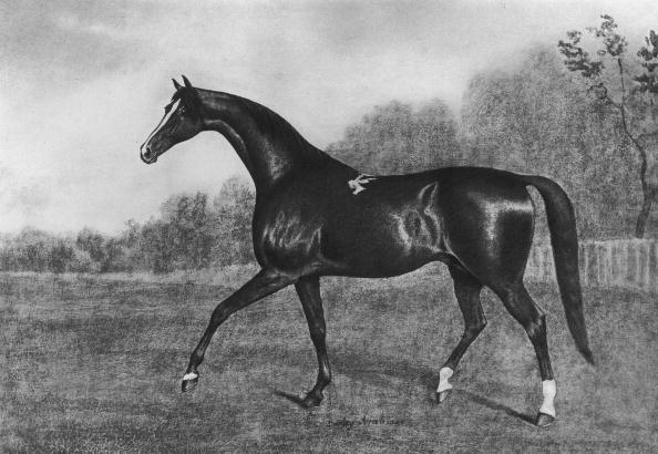Horse「Darley Arabian」:写真・画像(14)[壁紙.com]