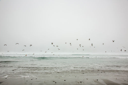 Flock Of Birds「Birds flying on ocean beach」:スマホ壁紙(14)