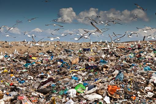 Flock Of Birds「Birds flying over landfill」:スマホ壁紙(18)