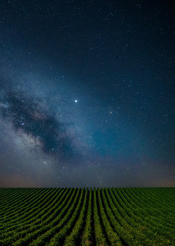 Organic Farm「Blue clear Night over the vineyards.」:スマホ壁紙(7)