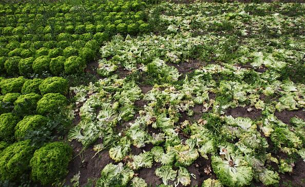 Salad「Farmers Seek Compensation Following EHEC Outbreak」:写真・画像(17)[壁紙.com]