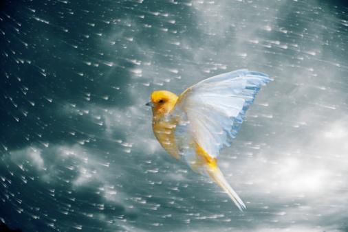 Digital Composite「Canary flying in storm」:スマホ壁紙(11)