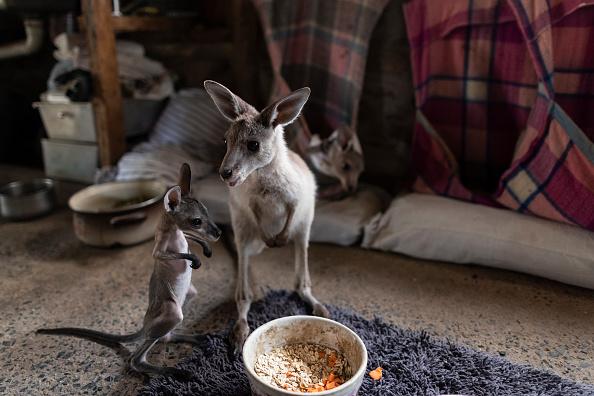 Animal「Wytaliba and Torrington Communities Start To Rebuild Following Devastating Bushfires」:写真・画像(12)[壁紙.com]