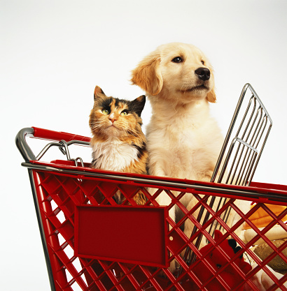 Motorized Vehicle Riding「Yellow Labrador puppy and tricolor cat sitting in shopping cart」:スマホ壁紙(6)
