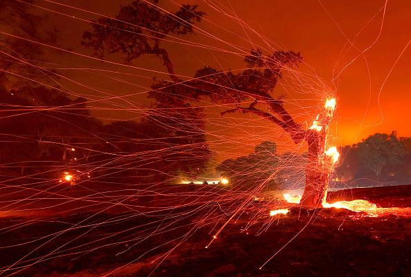 Tree「Hennessey Fire Burns In Napa County」:写真・画像(1)[壁紙.com]